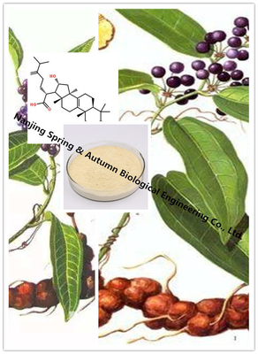 Poria Cocos Extract بروتوباناكساديول Skin Whitening Pachymic Acid 29070-92-6